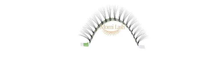 6d lash